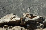 Bird at Summit
