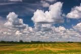 Windmills and field