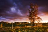 Tree by the farm
