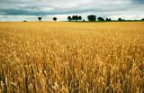 Harvest II