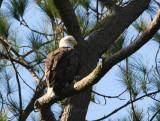 12-20-09 eagle 1657.jpg