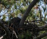 12-20-09 eagle nest 1710.jpg