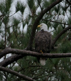 1-1-10-eagle-4691.jpg