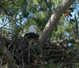 2-1-10-female-eagle-6109.jpg
