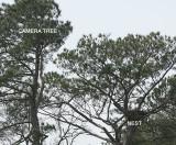 camera-tree-nest-7163.jpg
