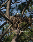 3-20-10-squirrel-below-nest-2181.jpg