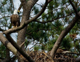 3-25-10-eaglet-poop-shot-3485.jpg