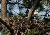 3-25-10-eaglet-3371.jpg
