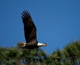 3-27-10-eagle-4107.jpg