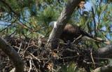 4-2-10 eaglet 7346.jpg