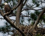 4-3-10-eagle-family-8445.jpg
