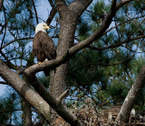 4-3-10-eaglets-8573.jpg