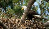 4-4-10-chick-9311.jpg