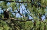 4-11-10-sharing-branch-1487.jpg