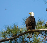 4-10-10-male-eagle--dragon-0833.jpg