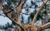 5-29-10-5521-3-eaglets.jpg