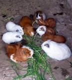 2008 Peru: Lunch - return from Puno