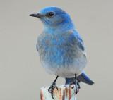 Bluebird  Mountain D-005.jpg