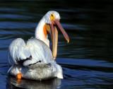 Pelican WhiteS-1180.jpg