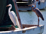 These freeloaders, a Great Blue Heron and White Egret,  are looking for a handout from a fishing boat in the Rockport, TX harbor