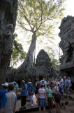 Ta Prohm - Tomb Raider tourists