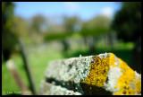 Multicolour Lichen