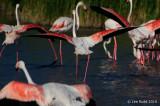 Flamingo Spread