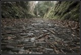 Cobbles and Twigs