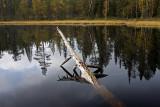 Oulanka National Park: Kiutaköngäs Trek: Hiidenlampi