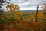 Pyhä-Luosto National Park: Noitatunturi Trek: Ruska