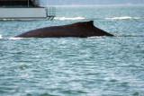 Whales of Alaska