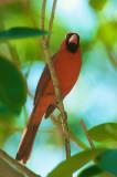 The Cardinal of the Keys