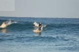 surfing delray  30088.jpg