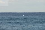 surfing delray  30182.jpg