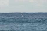 surfing delray  30183.jpg