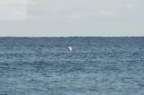 surfing delray  30184.jpg