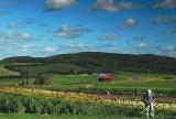 Bills Farm