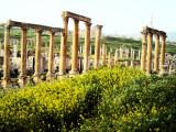 Spring in Jerash