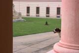 sightseeing dog
