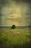 In a field of flowers.....