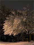 Snowy Night by Sodium Light