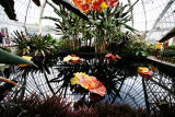 chihuly_at_phipps_2007