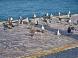 Waterfront, Playa del Carmen, Mexico