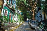 Tree lined street, OSJ
