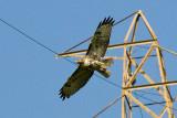 3/24/2010  Hawk
