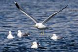 4/1/2010  Seagull