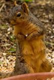 4/3/2010  Squirrel