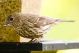 4/12/2010  At my bird feeder