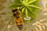 5/13/2010  Bee