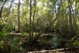 Bayou Coquille Trail